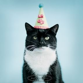 Happy Birthday, Kitty! | St. Bernard's Animal Medical Center